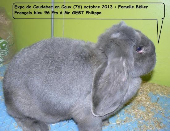 caudebec-en-caux-fbfb-10-13.jpg