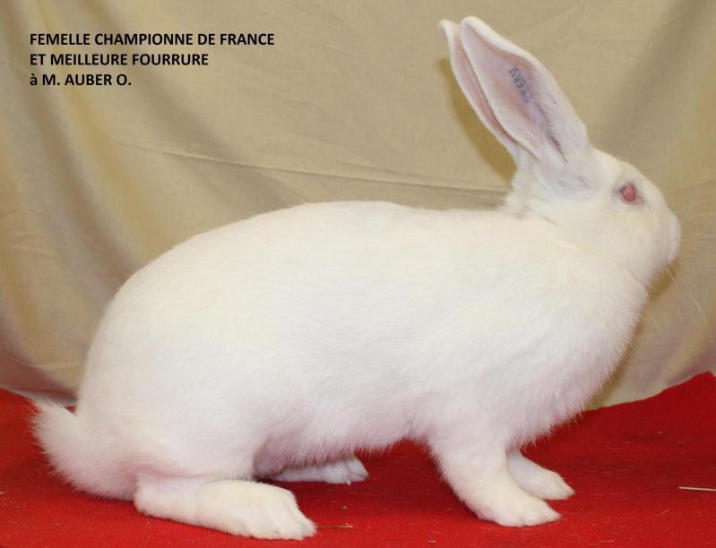 Femelle championne de france bouscat 3