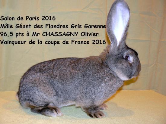 Mgdf chassagny paris2016